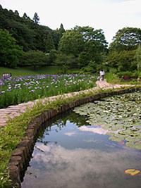 川村記念美術館池